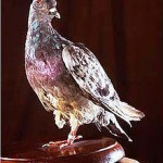 Cher Ami the famous war pigeon stopped devastating friendly fire